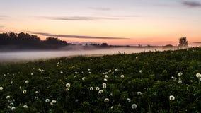 Nebel auf den Gebieten Lizenzfreies Stockbild