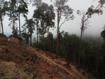 Nebel auf den Steigungen der Berge Lizenzfreie Stockfotos