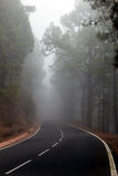 Nebel auf der Straße in einem Kiefernwald Lizenzfreies Stockfoto