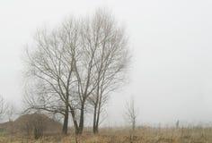 Nebel auf Herbst Stockfoto