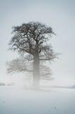 Nebel-Baum - Winter Lizenzfreie Stockbilder