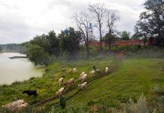 Nebel in Bogolyubovo Russland stockfotos