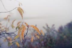 Nebel in dem Fluss Stockbild