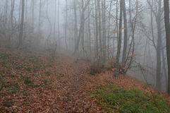 Nebel in den Bäumen des Waldes Lizenzfreie Stockfotos