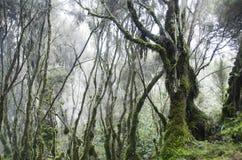 Nebel in den Bergen Stockbild