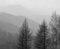 Nebel in den Bergen. Stockfotografie