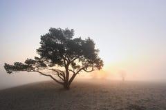 Nebel in den Dünen Stockbilder