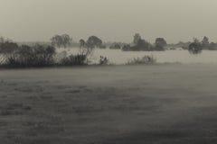 Nebel, der über der Wiese schwebt Lizenzfreies Stockbild