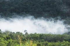 Nebel, der die Gebirgswälder bedeckt Lizenzfreie Stockbilder