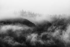 Nebel, der die Gebirgswälder in Schwarzweiss bedeckt Lizenzfreies Stockfoto