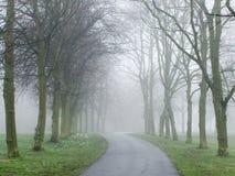 Nebel, der eine Straße in einem Park abdeckt Stockfoto
