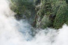 Nebel, der in Regenwald anhebt lizenzfreies stockfoto
