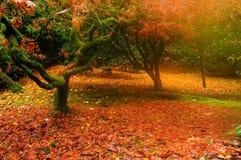 Nebel des frühen Morgens und Herbstfarben Stockfotos
