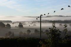 Nebel des frühen Morgens - Vereinigtes Königreich Stockbild