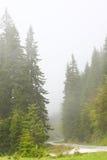 Nebel in einem Wald Stockbilder