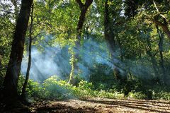 Nebel in einem Wald stockfotos