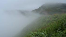 Nebel, Gras und Wind, die vor dem Berg durchbrennen stock footage