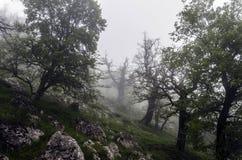 Nebel hoch auf dem Berg Stockbild