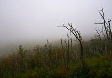 Nebel im Berg Stockfotos