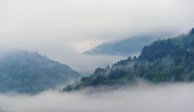 Nebel im Berg lizenzfreie stockbilder