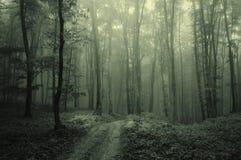 Nebel im dunklen Wald Lizenzfreies Stockbild