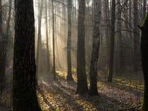 Nebel im Fallpark Lizenzfreie Stockbilder