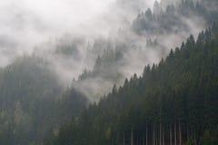 Nebel im Gebirgswald Stockfotografie