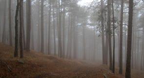 Nebel im Holz Stockbilder