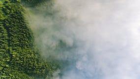 Nebel im Kiefernwald Stockbilder