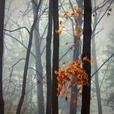 Nebel im Park Stockbild