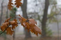 Nebel im Park am frühen Morgen stockfoto