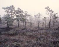 Nebel im Sumpf lizenzfreie stockfotos