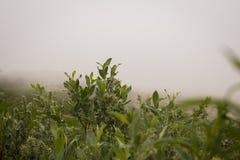 Nebel im Tal Stockfotos