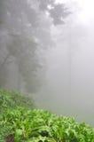 Nebel im Wald Stockbilder