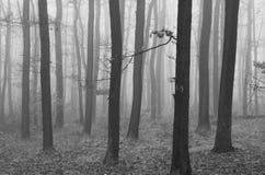 Nebel im Wald Lizenzfreies Stockfoto