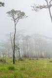 Nebel im Wald Lizenzfreie Stockbilder