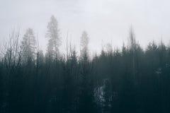 Nebel im Wald abgetönten Foto Stockfotografie