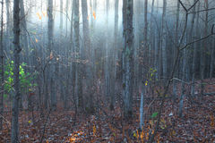 Nebel im Wald auf Wolf Creek Lizenzfreie Stockfotos