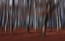 Nebel im Wald farbigen mystischen Hintergrund Magischer Waldmagische künstlerische Tapete fairytale Traum, Linie Baum in einem ne stockbilder