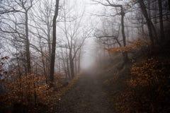 Nebel im Wald in Harz-Bergen Deutschland stockfoto