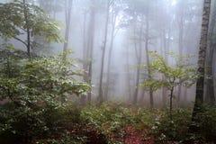 Nebel im Wald während des Herbstes Lizenzfreies Stockfoto