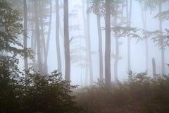 Nebel im Wald während des Herbstes Lizenzfreie Stockbilder