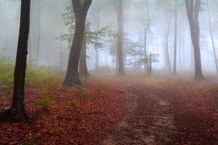 Nebel im Wald während des Herbstes Stockbild