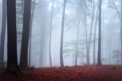 Nebel im Wald während des Herbstes Stockfotos