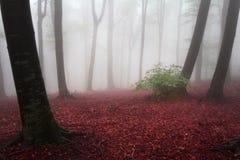 Nebel im Wald während des Herbstes Lizenzfreie Stockfotos