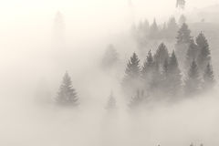 Nebel klettert auf dem Hügel vor dem Sonnenaufgang Stockfotografie