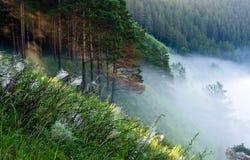 Nebel am Rand des Waldes lizenzfreie stockfotos