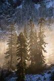 Nebel und Bäume Stockbild