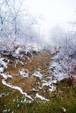 Nebel und Eis auf Pfad Stockfotografie