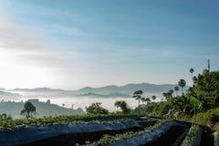 Nebel-und Sonne Morgen nach Berg lizenzfreie stockfotografie